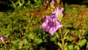 Slechts denk ik deze purpere bloem leuk is? stock foto