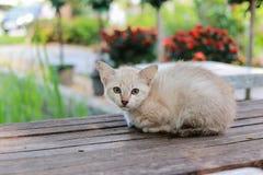 Slechts kat Stock Afbeeldingen