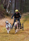Sled Dog Association Scotland, race participant. Royalty Free Stock Photography