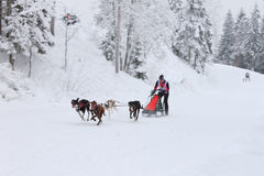 Sled Dog Race, dog team running on the winter road Stock Photos