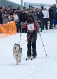 Sled Dog Race in Kharkiv, Ukraine Royalty Free Stock Photos