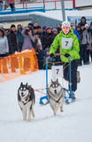 Sled Dog Race in Kharkiv, Ukraine Stock Photo