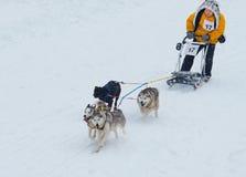 Sled Dog Race in Kharkiv, Ukraine Royalty Free Stock Images