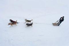 Sled Dog Race in Kharkiv, Ukraine Royalty Free Stock Photo