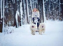 Sled Dog Race in Kharkiv, Ukraine Stock Images