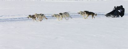 Sled dog Race in Lenk / Switzerland 2012 Stock Photography