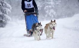 Sled dog race with siberian huskies Stock Photos