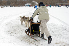 Sled dog race on snow in winter day Stock Photography