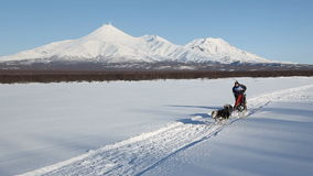 Sled dog racing on background of Kamchatka volcanoes stock video footage