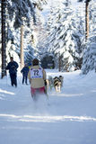 Sled Dog Racing Stock Photos