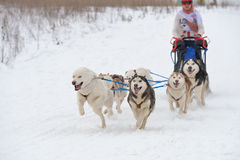 Sled dog racing Stock Photography