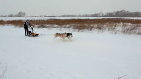 Sled dog racing Stock Image