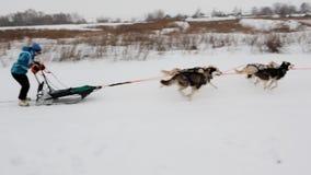 Sled dog racing stock video footage