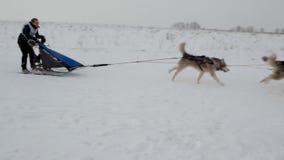Sled dog racing stock video