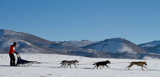 Sled dog racing mountain background Stock Photo