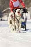 Sled dogs Royalty Free Stock Photos