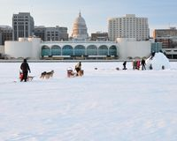 Sled dogs and igloo. Dog sled approaching igloo being built on Lake Monona just off shore from the Monona Terrace.  Capitol Dome in the background Royalty Free Stock Photography