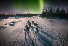 Sled dogs and northern lights. A team of six husky sled dogs running on a snowy wilderness road in the Canadian north under the aurora borealis and moonlight Royalty Free Stock Photos