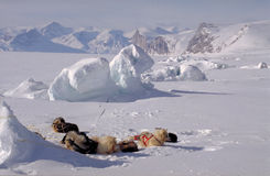 Sled dogs at rest. Baffin Island (Artic Royalty Free Stock Photos