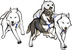 Sled dogs run. Vector drawing running sled dogs