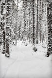 Sled Path in Forest Stock Photos