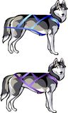 Sled rides and cargo. And cargo sled rides - harness for sled dogs Royalty Free Stock Photo