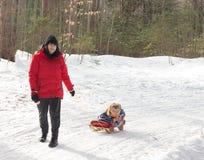 Sledder confuso del perro Fotos de archivo libres de regalías