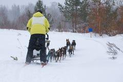 Sledding με τα γεροδεμένα σκυλιά σε ένα χειμερινό δάσος κοντά στην πόλης ένταση Totma Στοκ Εικόνα