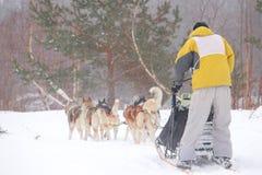 Sledding με τα γεροδεμένα σκυλιά σε ένα χειμερινό δάσος κοντά στην πόλης ένταση Totma Στοκ φωτογραφία με δικαίωμα ελεύθερης χρήσης