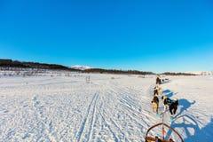 Husky safari. Sledding with husky dogs in Northern Norway royalty free stock photo