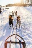 Husky safari. Sledding with husky dogs in Northern Norway stock photo