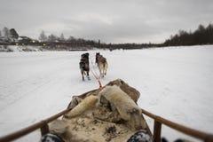 Sledding in Lapland royalty-vrije stock foto's