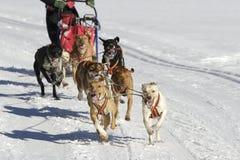 sleddog гонки Стоковые Фото