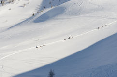Sleddog in Alpen Nockberge -nockberge-longtrail Stock Afbeeldingen