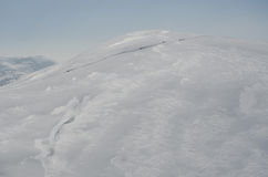 Sleddog in Alpen Tot bergpieken Stock Afbeelding