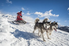 Sleddog Competition Royalty Free Stock Image