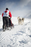 Sleddog competition Stock Photos