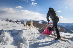 Sleddog competition Stock Photography