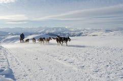 Sleddog del malamute d'Alasca in alpi Nockberge-longtrail Fotografia Stock