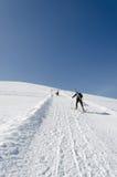 Sleddog in den Alpen Bis zu den Bergspitzen lizenzfreie stockfotografie