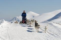 Sleddog des sibirischen Huskys in den Alpen Nockberge-longtrail stockfotografie