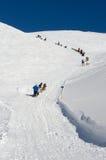Sleddog race i Alps Hela tiden stigande Royaltyfri Bild