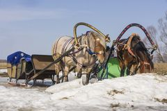 sledge Fotografia de Stock