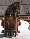 Sledge. Horse with the sledge on the snow Royalty Free Stock Images