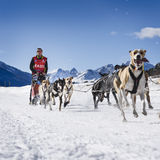 Sledge dogs in speed racing Stock Image