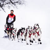 Sledge dogs in speed racing Stock Photography