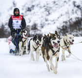 Sledge dogs in speed racing Royalty Free Stock Photos