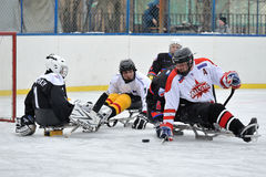 Sledge hockey goalie and four players royalty free stock photo