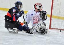 Sledge hockey goalkeeper and striker Stock Image