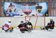 Sledge hockey goalkeeper and three players Royalty Free Stock Images